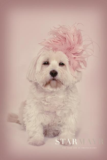 Starmayr, Hundefotografie,Tierfotografie,  Linz, Leonding, Models gesucht 1